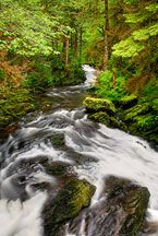 Tongass National Forest in southeastern Alaska is the largest national forest in the United States at 17 million acres (69,000 km²). Most of its area is part of the temperate rain forest WWF ecoregion, itself part of the larger Pacific temperate rain forest WWF ecoregion, and is remote enough to be home to many species of endangered and rare flora and fauna. Tongass encompasses islands of the Alexander Archipelago, fjords, glaciers, and peaks of the Coast Mountains