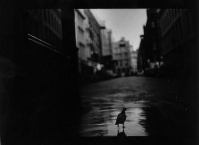 Eternal_London_pidgeon