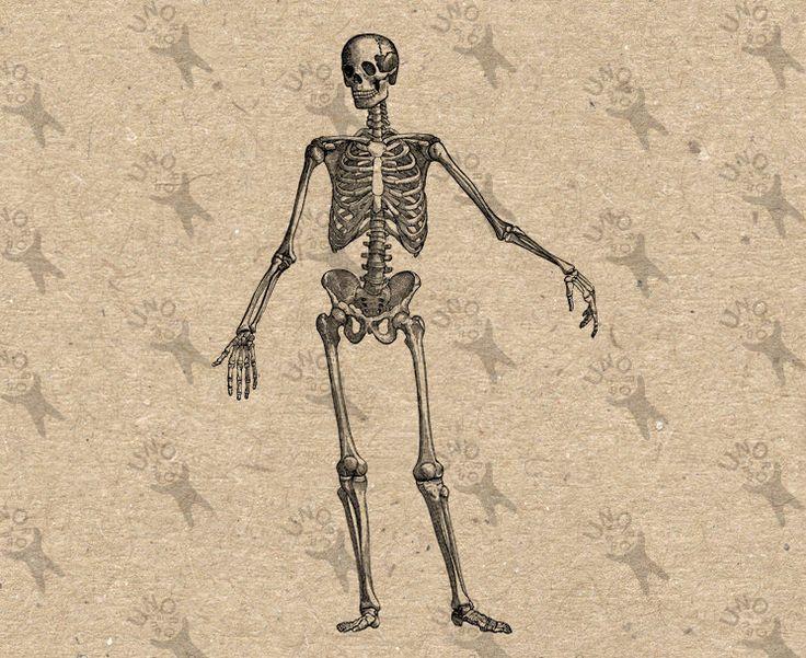 Vintage skeleton drawing