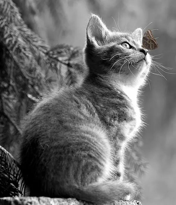Pin By Rita Leydon On Cats Paws And Whiskers Baby Cats Animals Cats