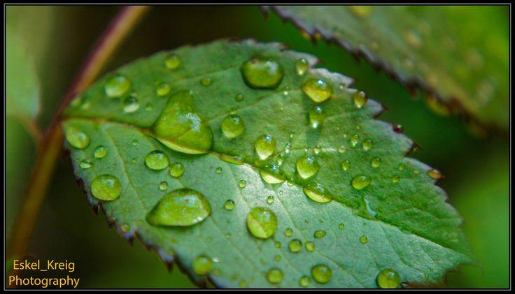 Leaf in water and light by EskelKreig on DeviantArt