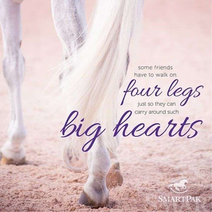 Horses willingly share love that can only be held by huge hearts! We must not neglect or forget that gift!
