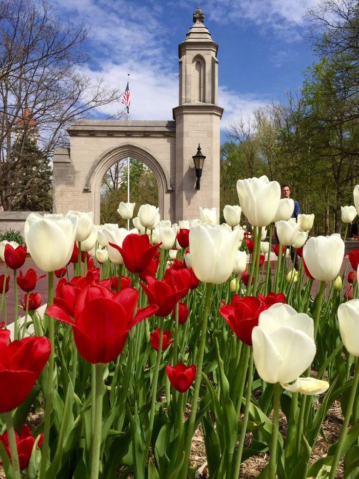 Indiana University (Bloomington): Top Tips Before You Go - TripAdvisor