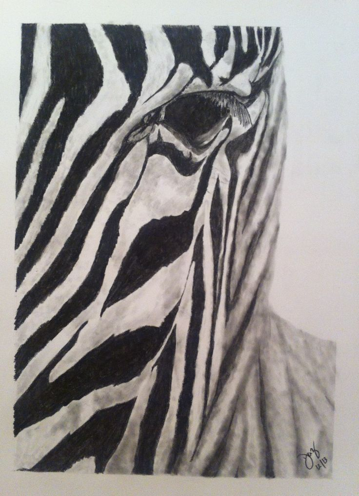"""""""Z"""" - Look this Zebra in the eye and you'll see the rest of him in perspective!"""