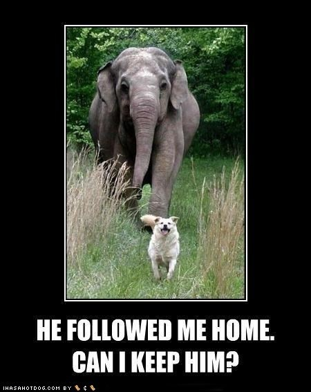 Can I keep him??? This was sooooo me when I was young...:) Who am I kidding I still do it...: Real Life, Moonmoon, Best Friends, Elephant, Funny Stuff, Funny Animal, Moon Moon, New Friends, True Stories
