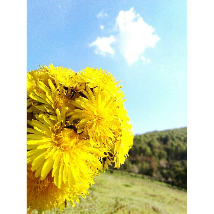 Çiçekler bir şölen yaşamda, Renklerin en büyük orkestrası.. Dursuz-duraksız çalar her insanda Sevinci, aldanıyı, ölümü ve yası. Özdemir Asaf