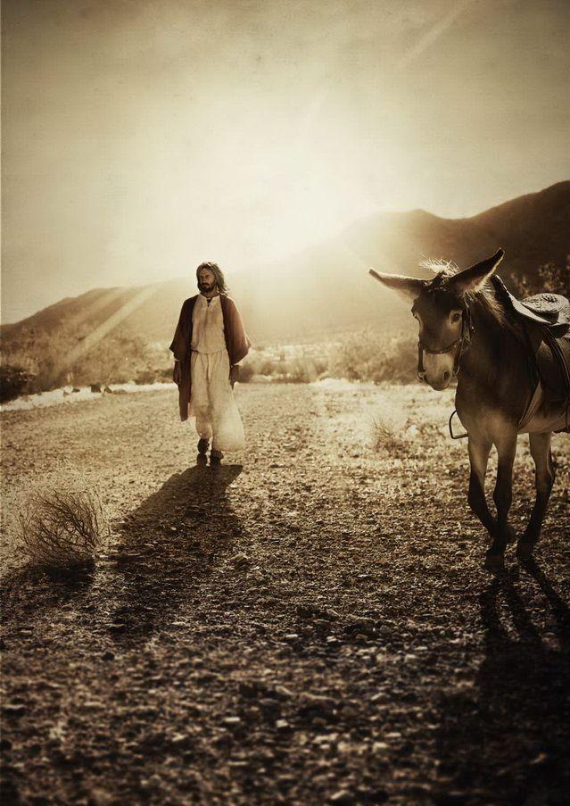 «У меня и осла-то никакого нет, игемон, – сказал он. – Пришел я в Ершалаим точно через Сузские ворота, но пешком, в сопровождении одного Левия Матвея, и никто мне ничего не кричал, так как никто меня тогда в Ершалаиме не знал.»