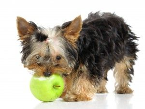 Safe foods to feed pets!