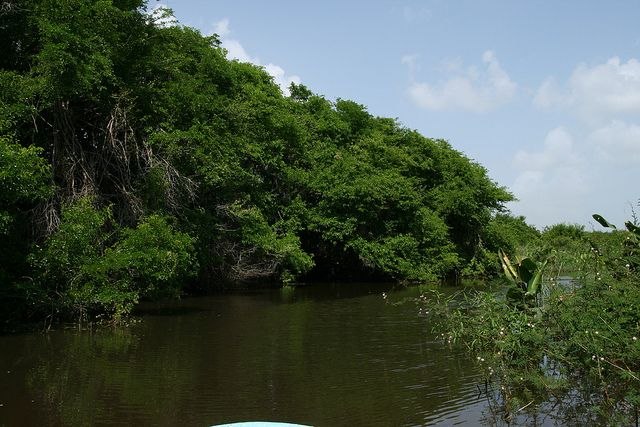 crooked tree belize | Crooked Tree Wildlife Sanctuary – Belize | Tripomatic