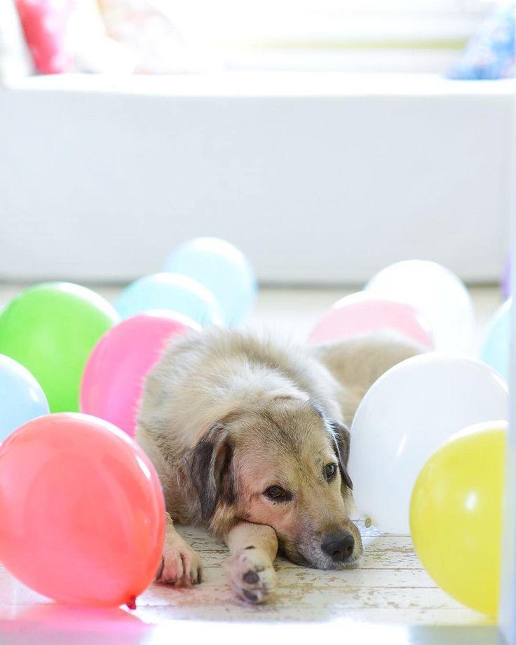 Happy 1st of May!   #vappu #mayday #tb #dogsofinstagram #myunicornlife #abmhappylife #flashesofdelight #livethelittlethings #thehappynow #ohwowyes