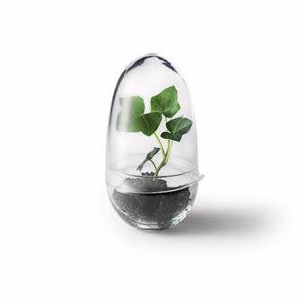 Krijg jij ook geen genoeg van kweken? Deze kweekkas van Design House Stockholm laat jouw plantjes groeien als kool.