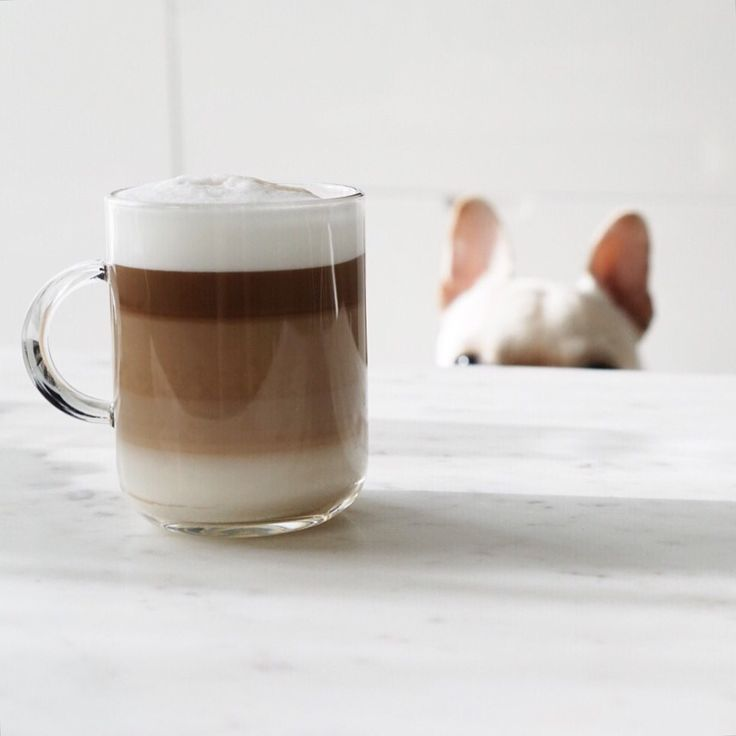 coffee layers + frenchie ears