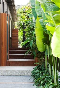 Bird of paradise and philodendrons