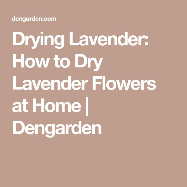 Drying Lavender: How to Dry Lavender Flowers at Home   Dengarden