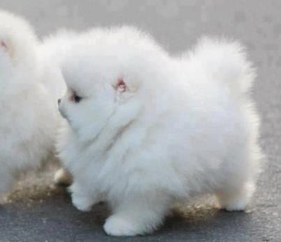 It's so fluffy im gonna die!!