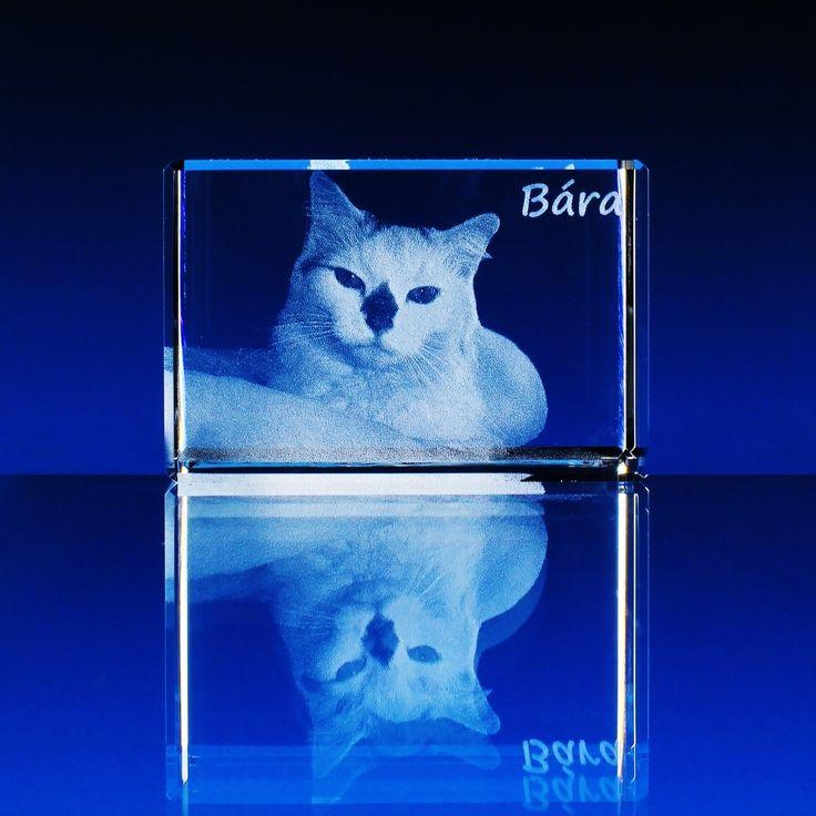 foto ve skle