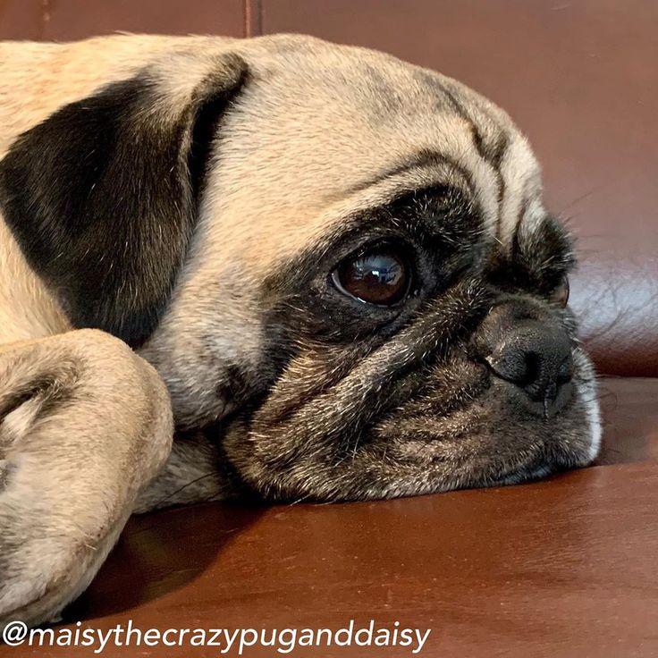 Panosteitis In Dogs • Dogdogs