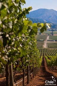 #Colchagua Valley, Chile. Some of the best vineyards of the world!!
