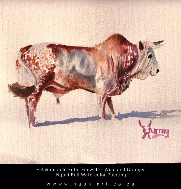 EhlakaniphilecFuthi Egcwele - Wise and Grumpy Nguni Bull Watercolor Painting www.nguniart.coza