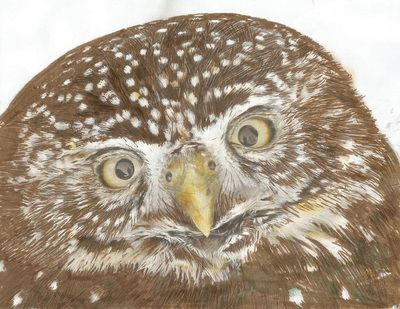 Images Of Greyscale Adult Owl Coloring Pages