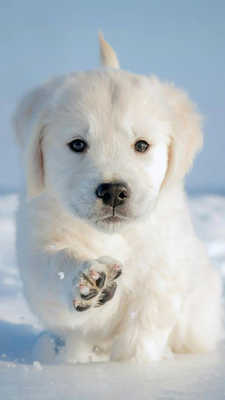 Download Cane Cucciolo Wallpaper By Djicio 36 Free On Zedge Now Browse Millions Of Popular Dog Wallpaper Cute Animals Cute Puppy Wallpaper Very Cute Dogs