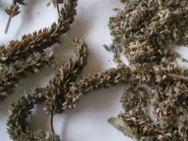 How I grow and harvest organic Chia seeds and other living off the grid tips