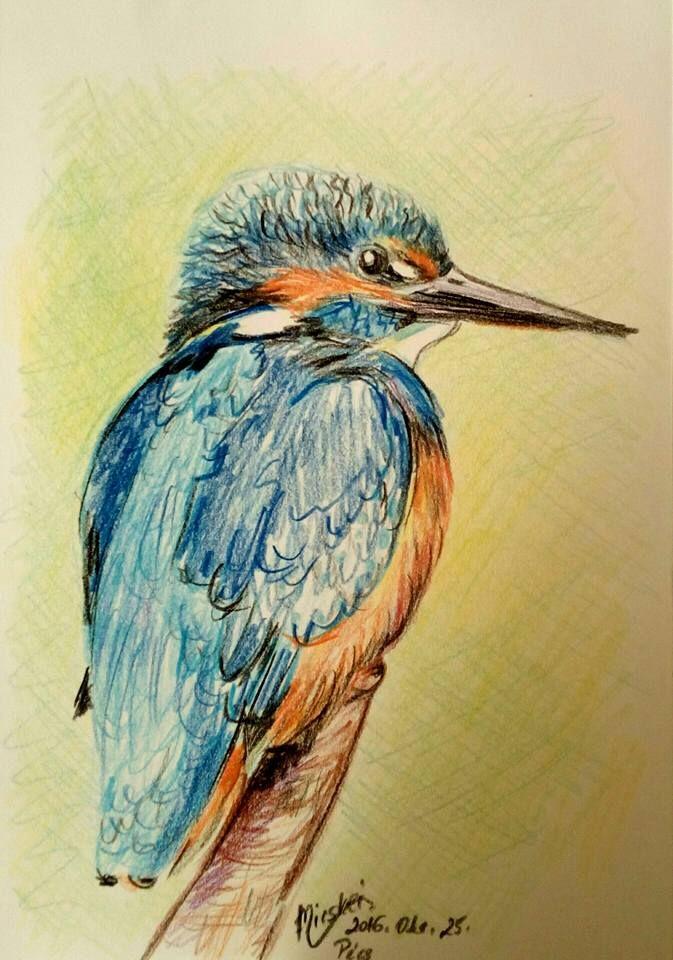 Jégmadár- VI--madár9- -színes ceruza rajz- -24x17 cm