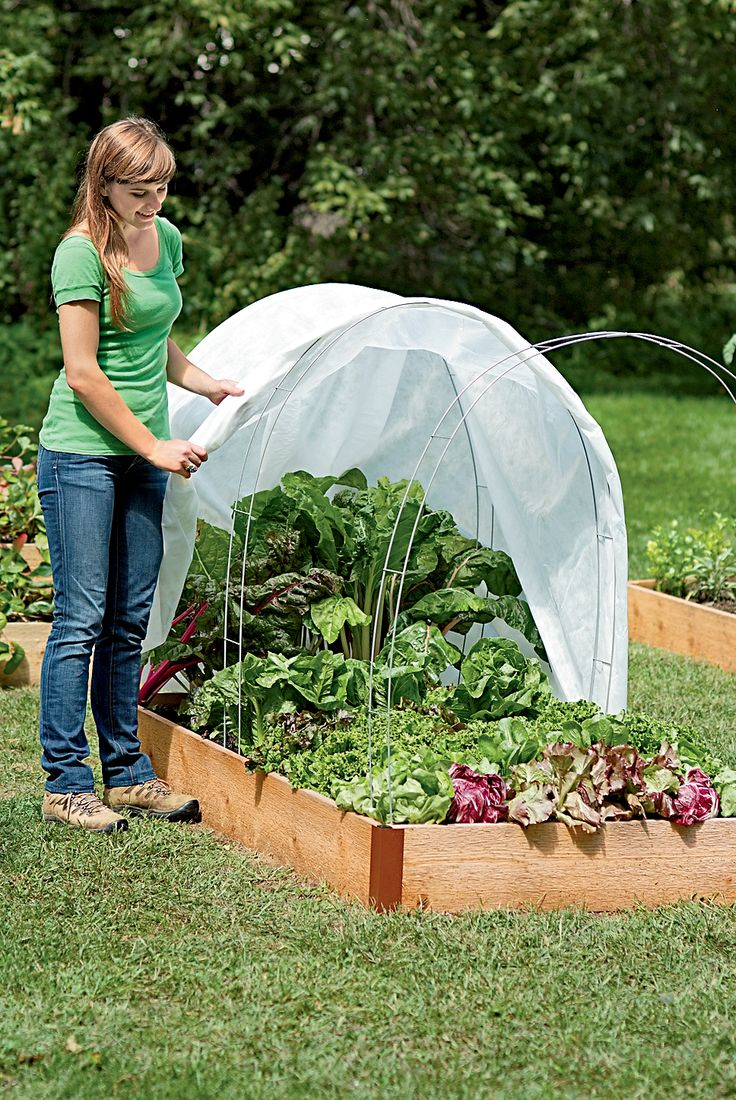 You can make a mini greenhouse dome for about $6.How to start a winter vegetable garden - The Cheap Vegetable Gardener