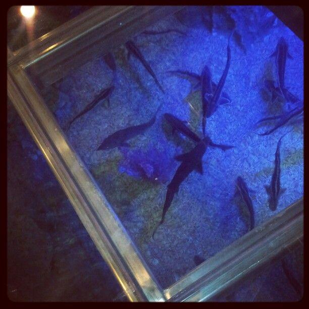 Nice real fishes floor design at Caspian Rivera Hotel. Kazakhstan Aktau.