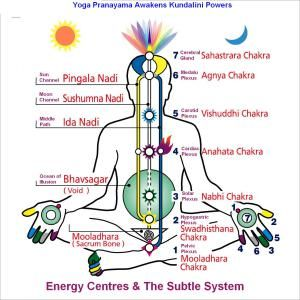 The Chakras(Credit: Google)