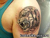 Значение тату: «Тигр». - 26 Июня 2014 - ТатуировкиЗначение тату: «Тигр». Эзотерика - Карты таро, Сонник, Амулеты, Игральное таро и многое другое...