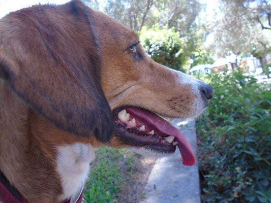 Κι επιτέλους, έρχεται να το αποδείξει αυτό μια νέα έρευνα με στοιχεία κι αποδείξεις! Πως ο άνθρωπος, πολλές φορές, προτιμά περισσότερο την παρέα ενός σκύλου από έναν άλλον άνθρωπο.Τα παρακάτω αποτελέσματα είναι από μία έρευνα που έγινε σε εκατοντάδες ιδιοκτήτες σκύλων παγκοσμίως...