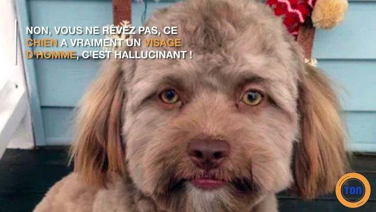 Sur les réseaux sociaux, la maitresse de Yogi a découvert grâce aux internautes que son chien avait un visage d'homme. Les yeux, les sourcils etc... Ce chien a bizarrement une grande ressemblance avec le visage d'un homme adulte.