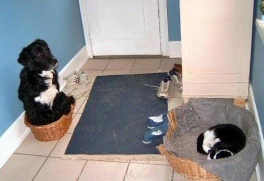 Cat Always Wins