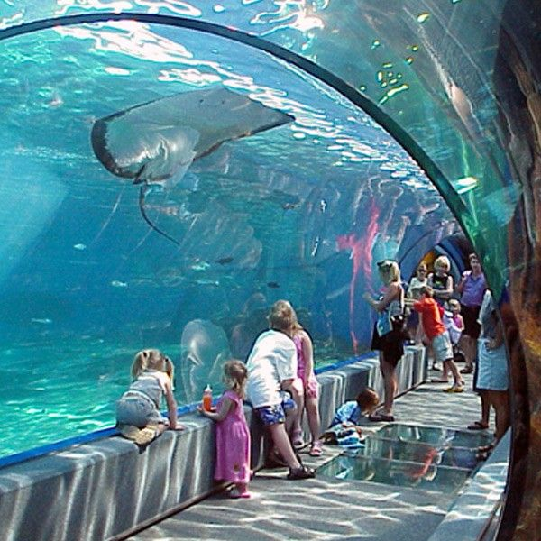 """The Hawaiian #Aquarium"" Maui Ocean Center is only aquarium in world for Hawaii's marine life.http://mauiticketsforless.com/maui-attractions/maui-ocean-center.html#.VPDVT_nF-SM"