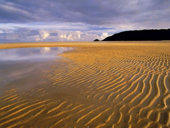 Low Tide, Abel Tasman National ParkBeautiful Places, Christ Jesus, National Parks, Travel, Abel Tasman, South Islands, Tasman National, Animal Life, New Zealand