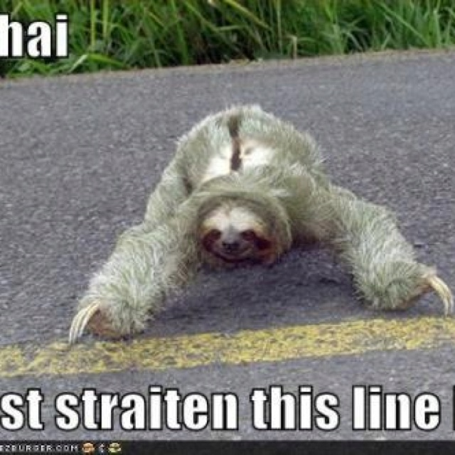 Cute sloth (ignore the caption) | Your Daily Dose of Awww ...