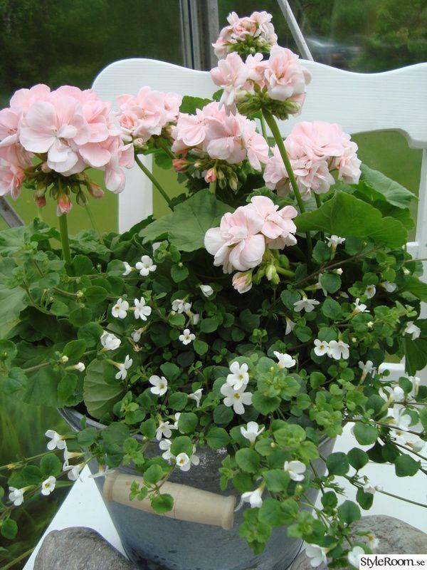 blommor,trädgård