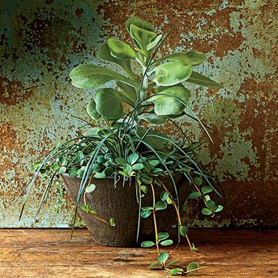11 best Indoor Container Gardens images on Pinterest | Container ...