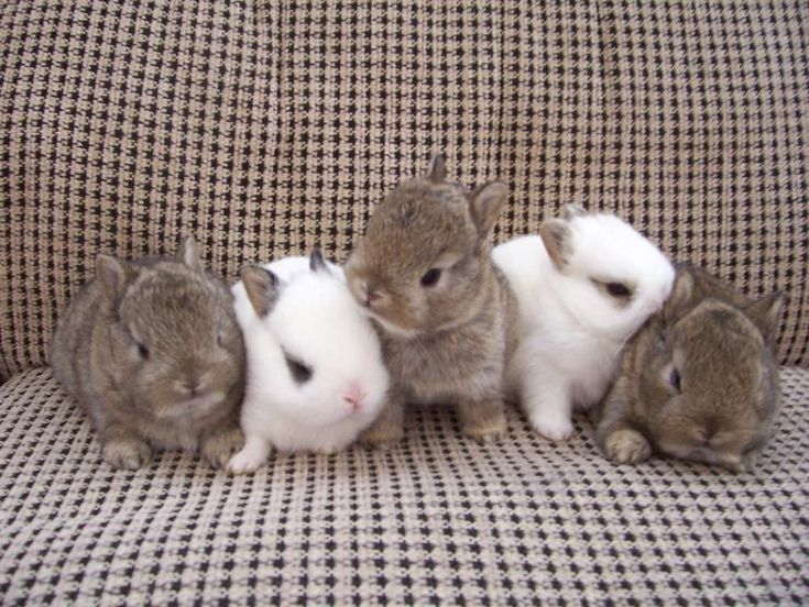 Joyous rabbit #rabbitsrock