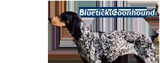 AKC Breed Standard for the Bluetick Coonhound