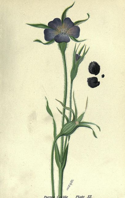 n54_w1150 by BioDivLibrary, via Flickr