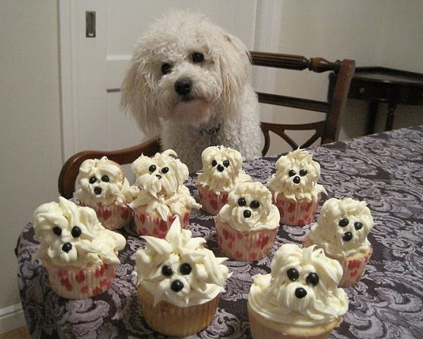 Make adorable puppy cupcakes and impress your kids or your guests. You will need: For cupcakes: - chocolate/ vanilla muffin mix (or check out the video below to find how