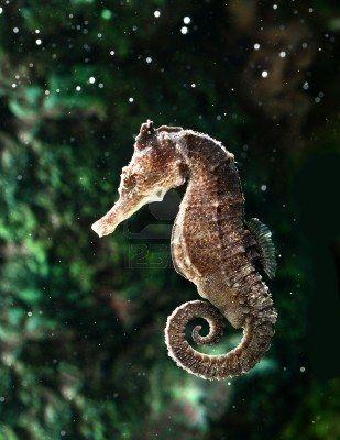 Seahorse ✿ #ocean life