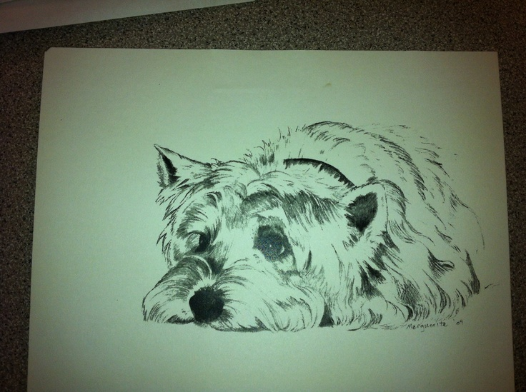 Schnauzer Drawing Easy: 17 Best Images About How To Draw Westie On Pinterest