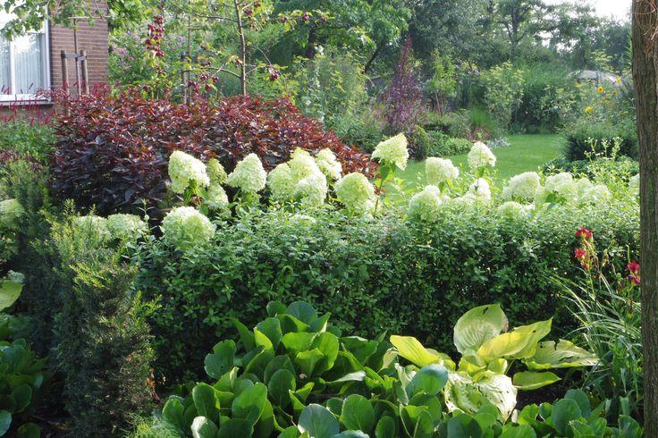 lijnenspel met hagen en hydrangea lime light