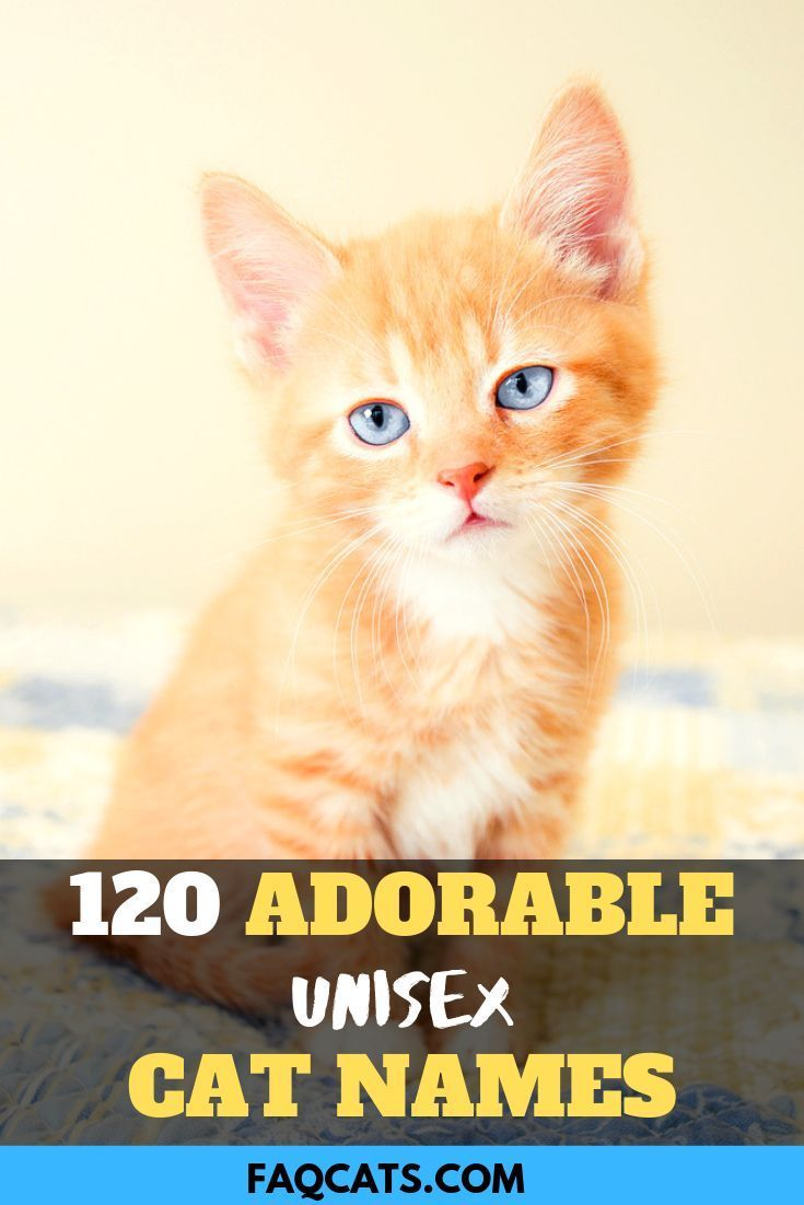 Adorable Unisex Cat Names In 2020 Kitten Names Kitten Names Girl Cute Cat Names