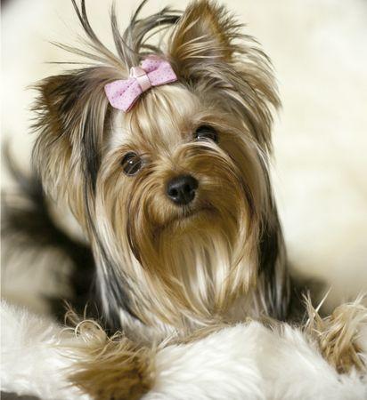 Revista Meu Pet - A revista que todo mês traz matérias incríveis para deixar seu bichinho saudável e feliz.<!--5 fatores que podem indicar que seu cachorro esteja com diabetes  Home SAÚDE -->
