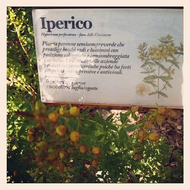 il nostro giardino #botanicao cresce.. tante piante cominciano a fiorire #natura #rispetto #ambiente #abocaseminar