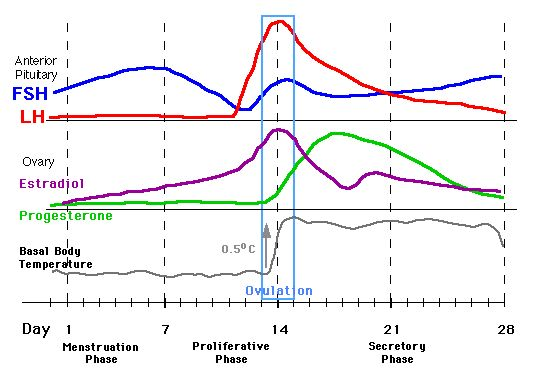 Hormone Levels During Menstrual Cycle Chart | Hormone ... Menstrual Cycle Calendar Graph